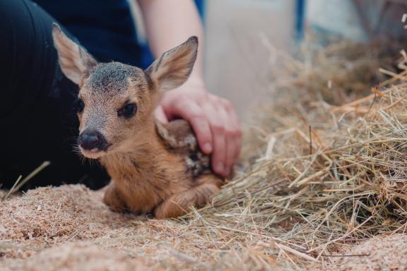 Tierpflegerschule_2019_03